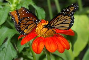 Butterflies_UFmuseum